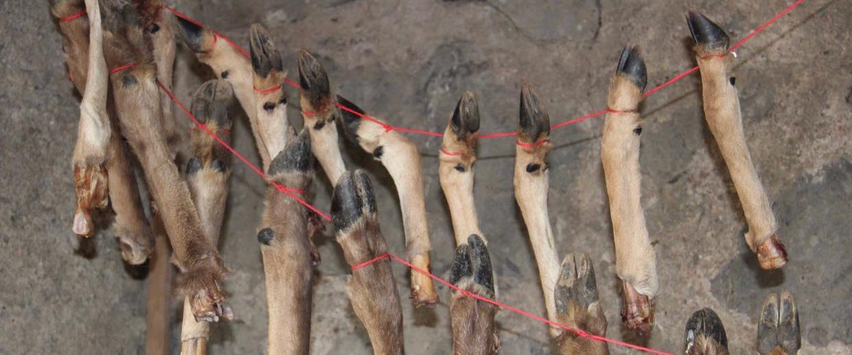 עצמות היחמורים שהתגלו