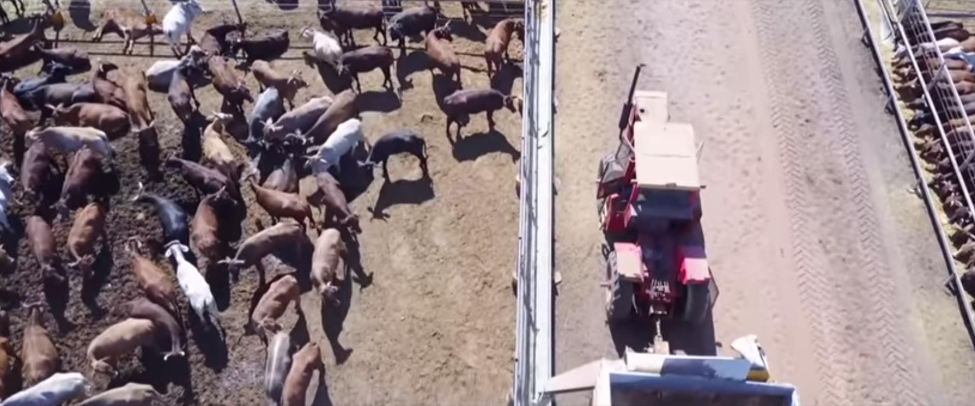 חוות בקר באוסטרליה, בה תועדה התעללות