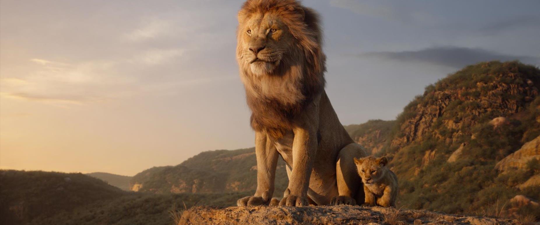 סימבה, מתוך הסרט