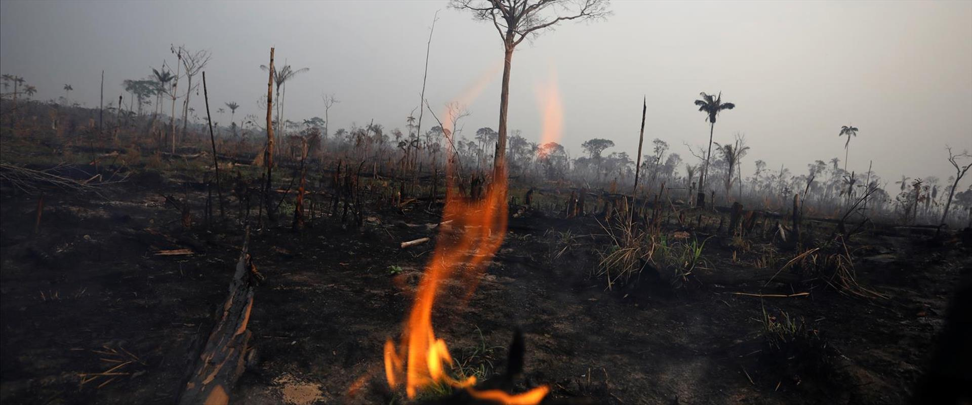השריפות באמזונס, השבוע