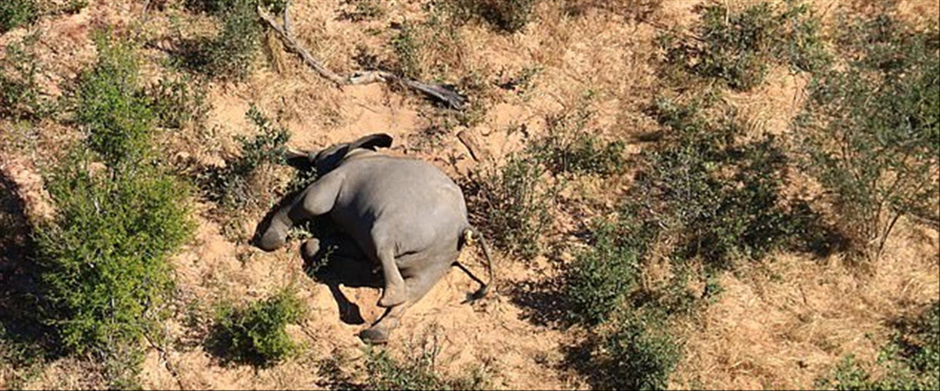 פיל שמת בבוטסואנה
